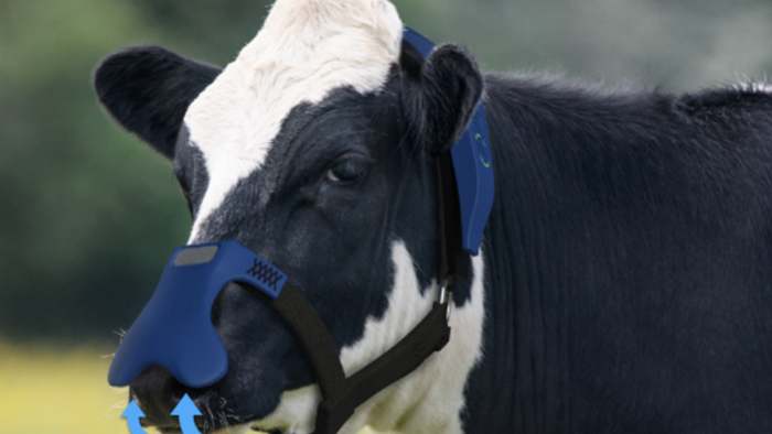 Cargill Taps Startup Producing Smart Cow Masks To Trap Methane Burps