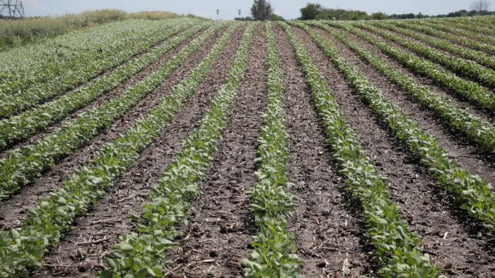 White Illinois Farmers Sue Over Race-Based Farm Loan Relief Program