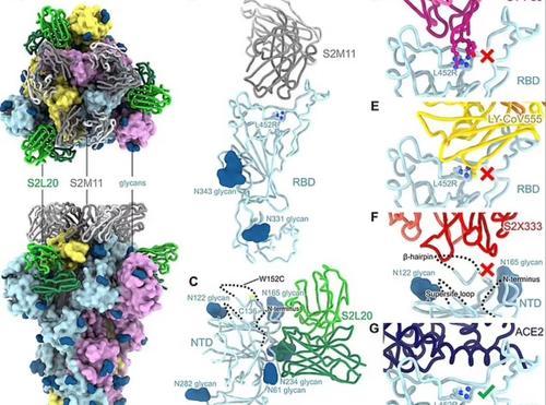 "California Researchers Discover America's First ""Triple"" Mutant COVID Strain 2"